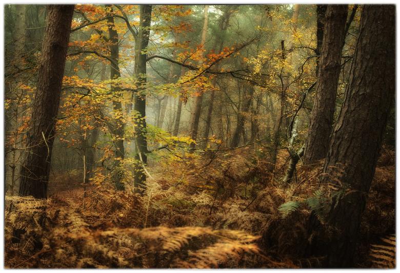 autumn collors  - iedereen bedankt voor de reacties op mijn vorige upload,mijn oog viel op dit boompje die tussen de dennenbomen stond,<br /> mvg.Rem