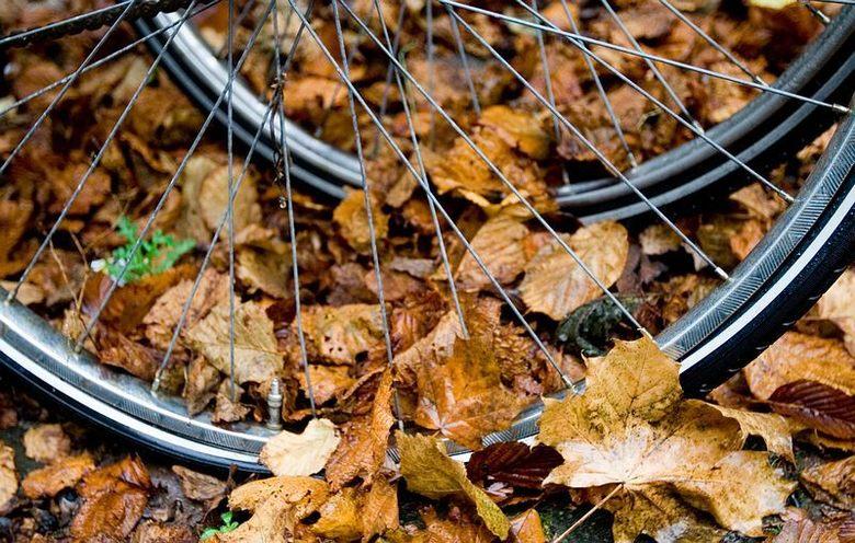 Herfst - De bladeren tussen de fietswielen.
