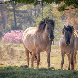 Wild Horses finding Shade