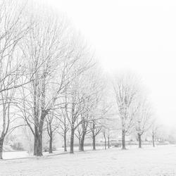 Winters wit Westeinde