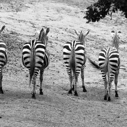 Vier op een rij