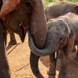 Dumbo Elephant Spa