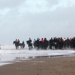300 Friese paarden aan zee
