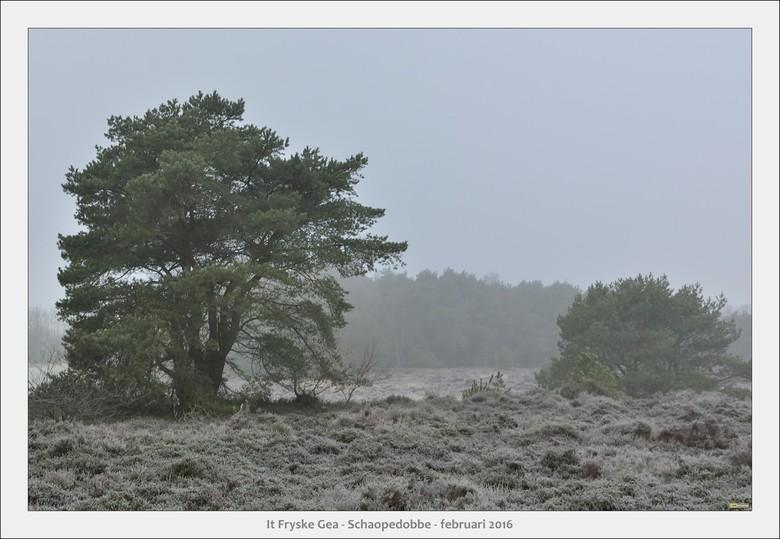 Schaopedobbe - Elsoo - Friesland - <br /> Wandelexcursie door een heide/veen gebied na een nacht met vorst
