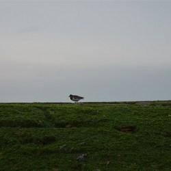 Vogel op pier