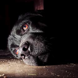 nieuwsgierige hond