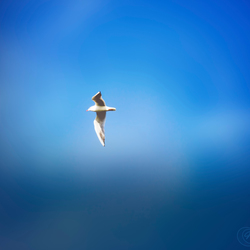 Seagull fly soft in the air