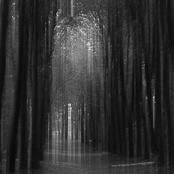 Magisch bos.