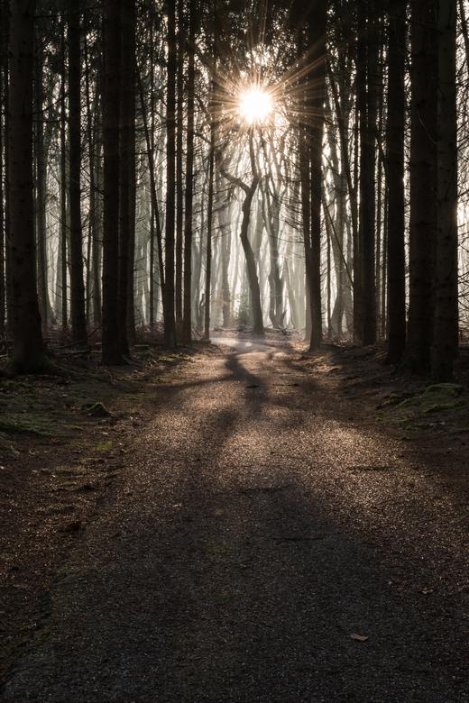 Winding path, twisting trees - Deze foto is gemaakt op een vrieskoude ochtend in het Speulderbos.