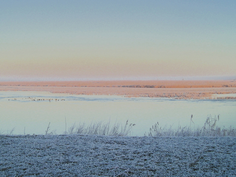 Eendjes - In deze kou zoeken de eenden de beschutte zijde op. Oostvaardeersplassen, foto Thomas Mesters, bewerking door mij.