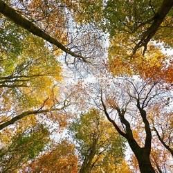 In het herfstbos......