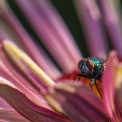 bewaker van de bloem 2