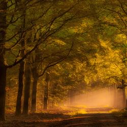 Zonsopkomst in het bos............