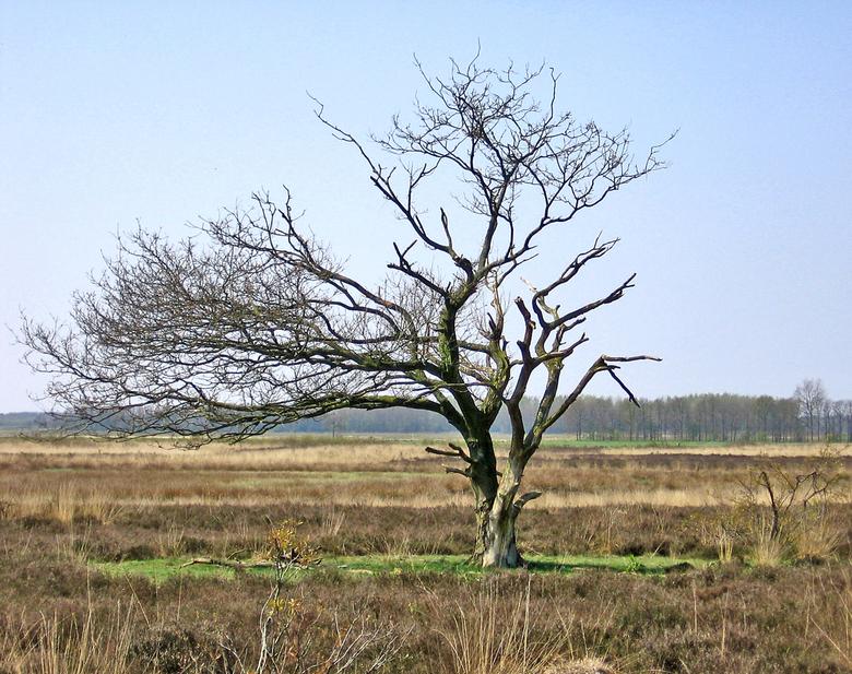 """Wild, Wild West - Het wilde westen in het Noorden van Nederland.<br /> <br /> Alleen de gier ontbreekt nog <img  src=""""/images/smileys/wilt.png""""/>"""