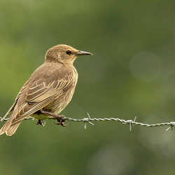 vreemde vogel, wie kan mij helpen