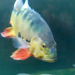 vissen in Blijdorp