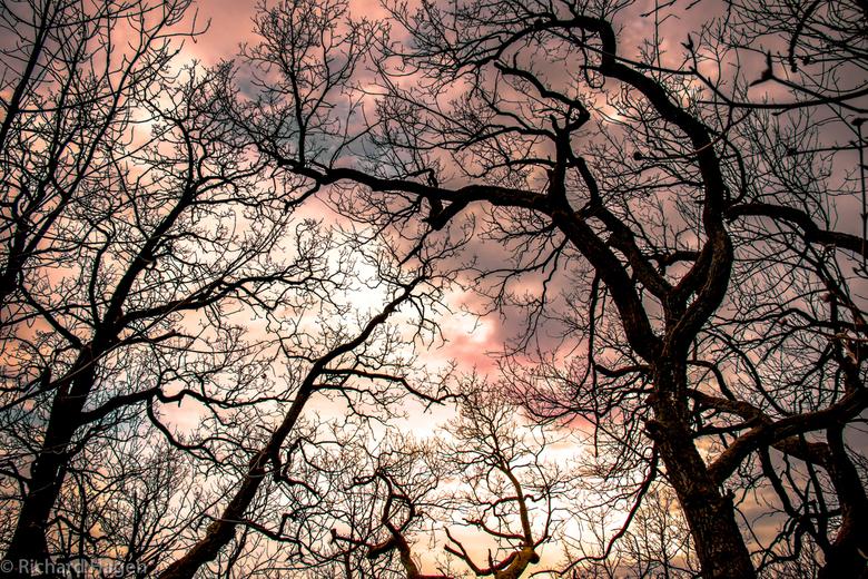 Bomen in paarse lucht