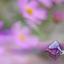 Aanmeren bij een zee van bloemen