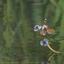 Mooie vlindersoort