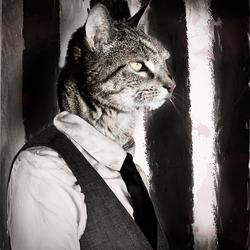 Half Kat Half gangster