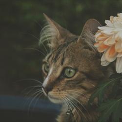 Kat en bloem