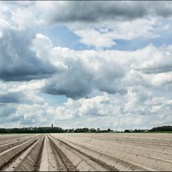 aardappelveld bij Eenrum