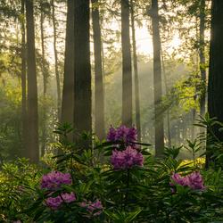 Bos in de vroege ochtend