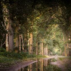 Creek Of Calmness
