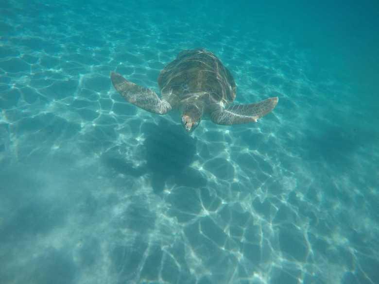 Schildpad - Zwemmen met deze prachtige schildpad op Curaçao.
