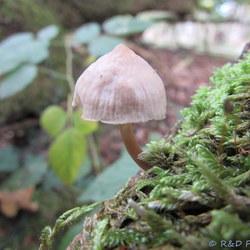 Eenzame paddenstoel..