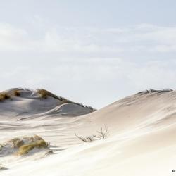 In de duinen van Bergen aan Zee