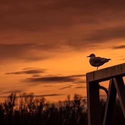 Uitkijkend naar de zonsondergang