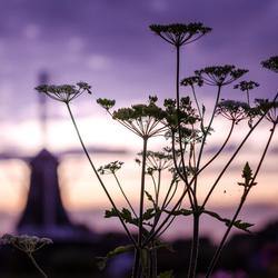 Silhouet tijdens zonsondergang