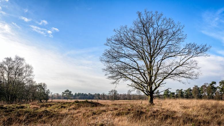 Herfst in het noorden - Het natuurgebied Ter Borg nabij Sellingen is ook in de herfst een bezoek waard.