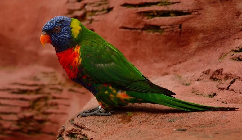 Een waterval van kleuren op 2 pootjes. - Foto genomen in Avifauna met de Nikon 18-55mm G2 lens.Scherp lensje hoor.