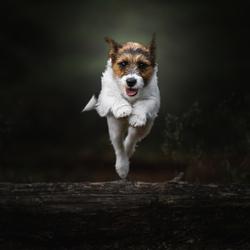 Jumping Jazz