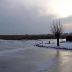 Winters landschap in Westzaan.