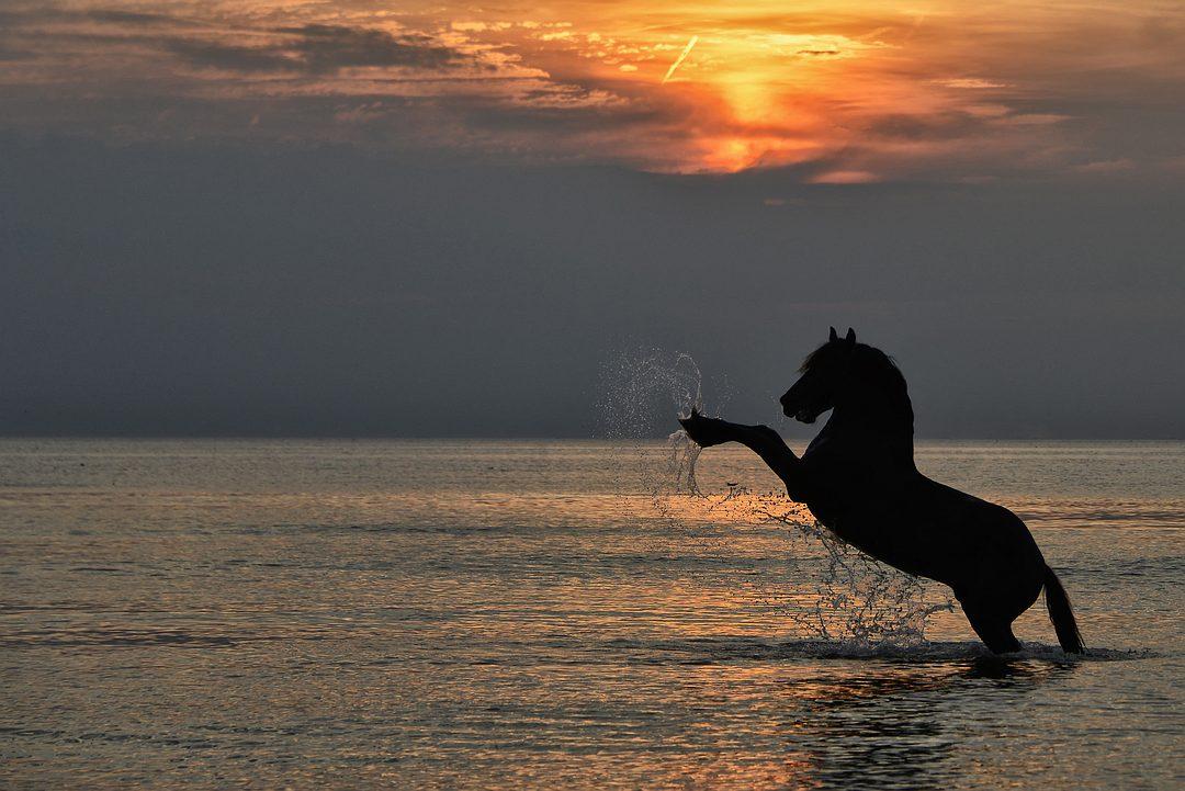 steigerend paard.