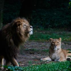Wat ruik ik? Burgers' Zoo Safari