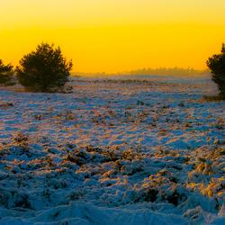 Veluwe winter 2008