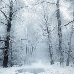 A white world