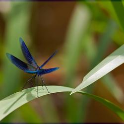 Spreid je vleugels...