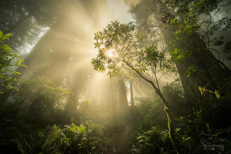 Heavens portal - Een mooie ochtend tussen de Redwoods in Amerika