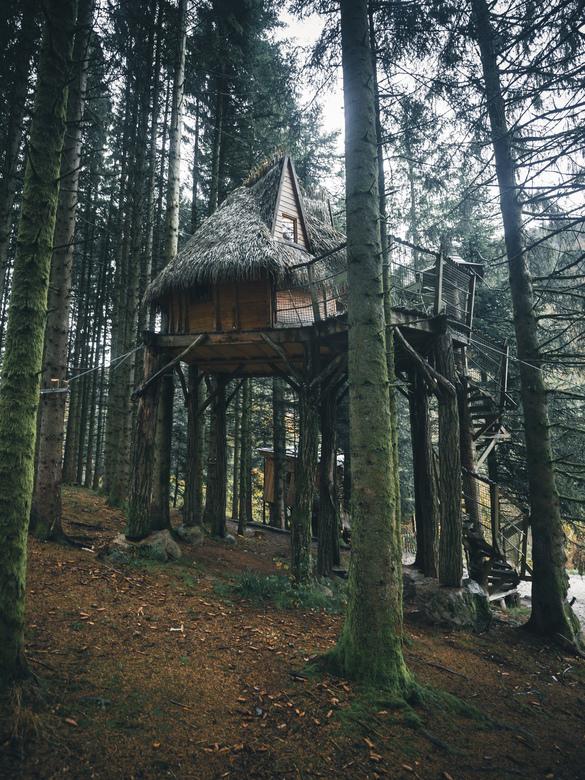 Another cabin goal... - Forest and cabins.<br /> <br /> Volg me gerust op:<br /> https://www.facebook.com/ShotByCanipel/<br /> https://www.instagr