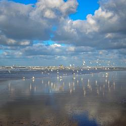 Winterse wandeling tussen Egmond en bergen aan Zee