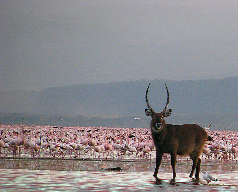Kenia Lake Nakuru National Park -