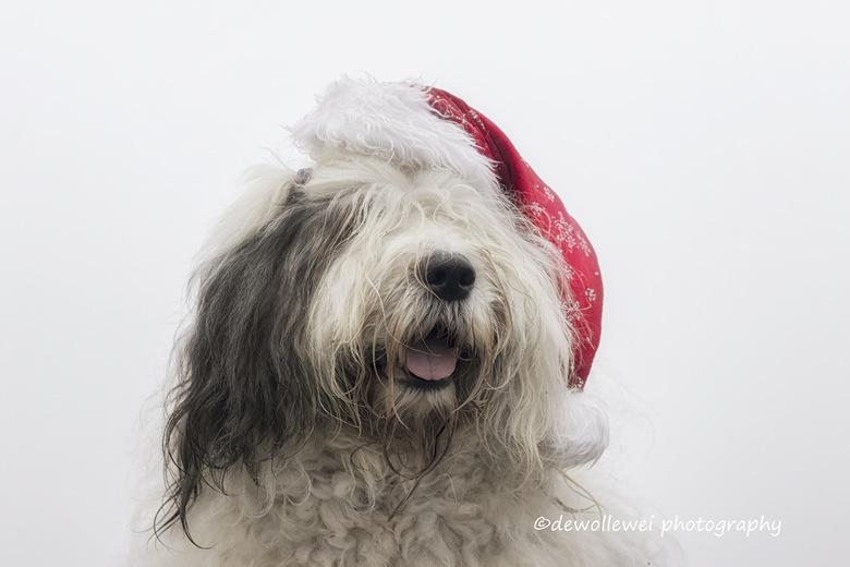 Scarlett's Christmas portrait - Scarlett's Kerst portret