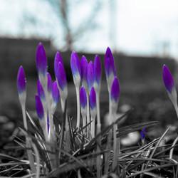 Laat het voorjaar maar komen