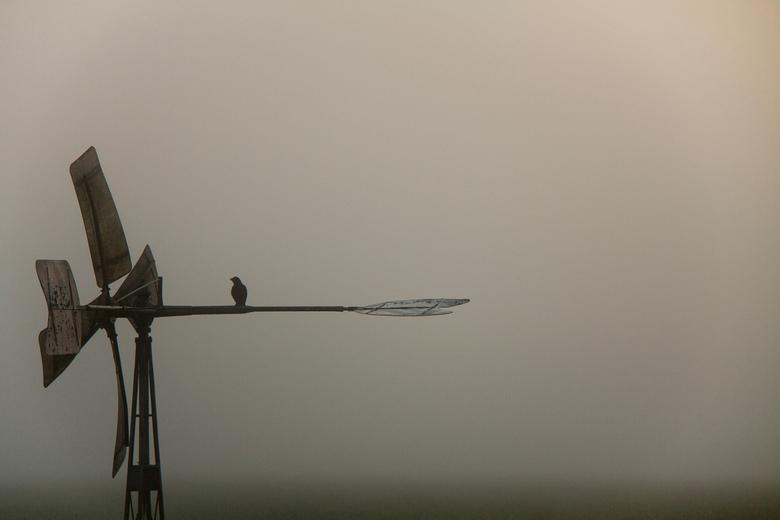 Bosmanmolentje met vogel - Uitkijkpost!