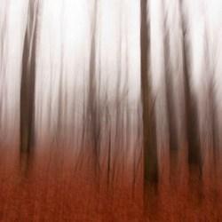 bewogen bomen I